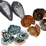 Fossils and Geodes