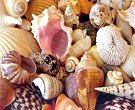 Tropical sea shells beach mix